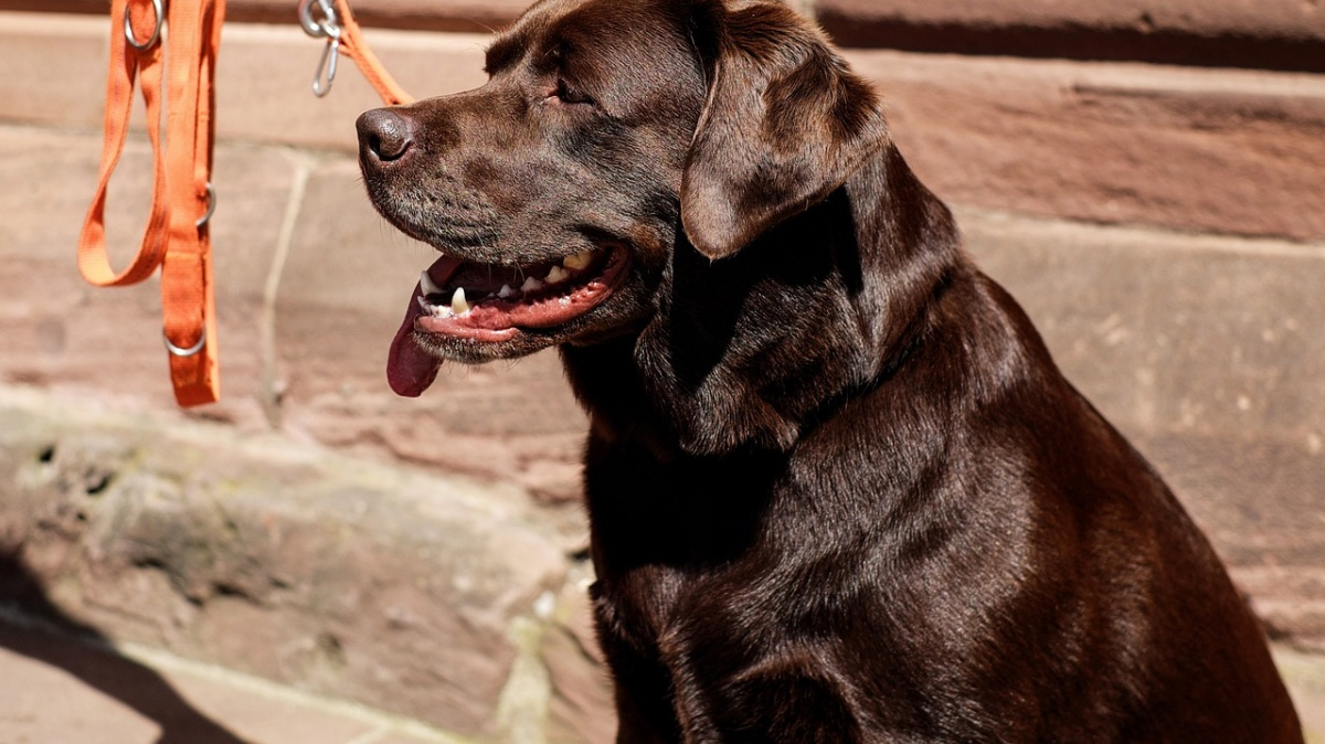 La scomparsa del cane Ettore
