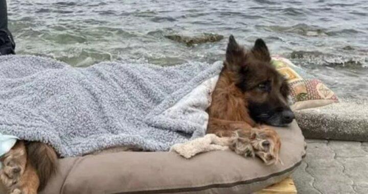 Gli ultimi giorni del cane Heart