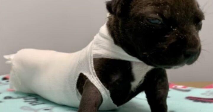 """""""Offriamo un'enorme ricompensa a chiunque ci aiuti a trovare colui che ridotto così questo cucciolo di poche settimane"""""""