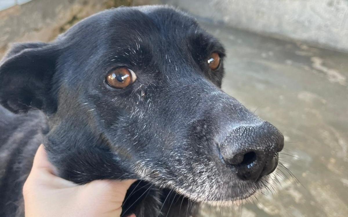 La triste storia di Laika