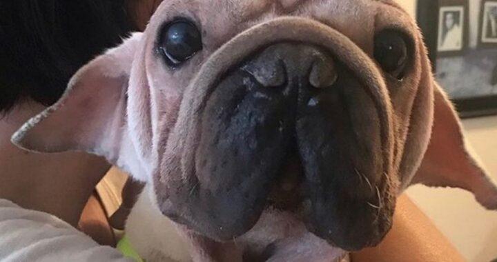 Mork, il cane che somiglia a Baby Yoda
