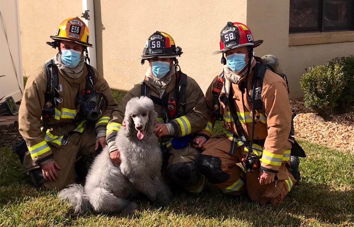 Prada, il cane che salva la casa di famiglia