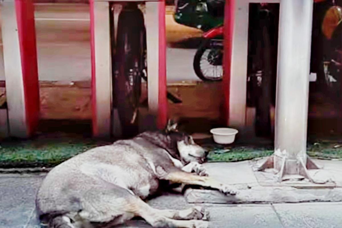 La commovente storia del cane Roly