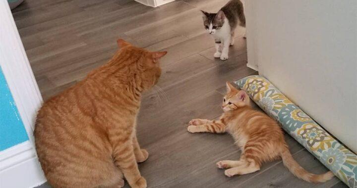 Romeo: da randagio a perfetto papà gatto