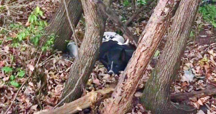 La cagnolina debole era immobile tra le foglie del bosco e nascondeva qualcosa di davvero inaspettato