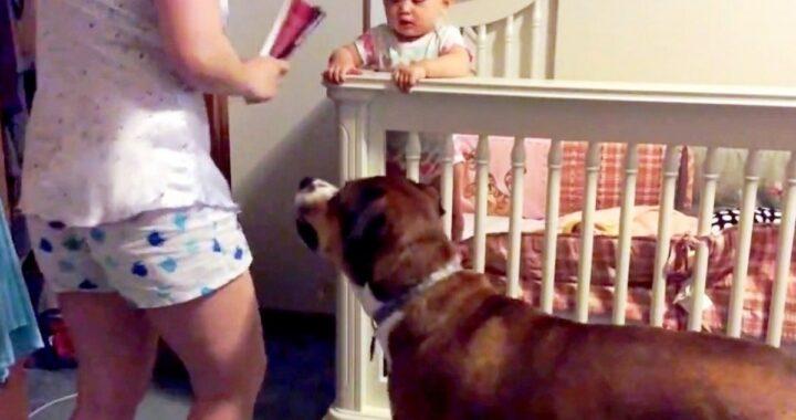 """Mamma finge di """"picchiare"""" il suo bambino per vedere la reazione del suo cane, ma guardate cosa fa l'animale!"""