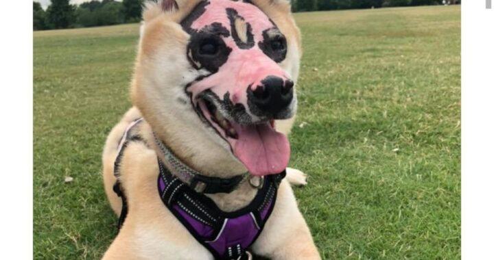 Rimasto ustionato, Taka diventa un meraviglioso cane da terapia