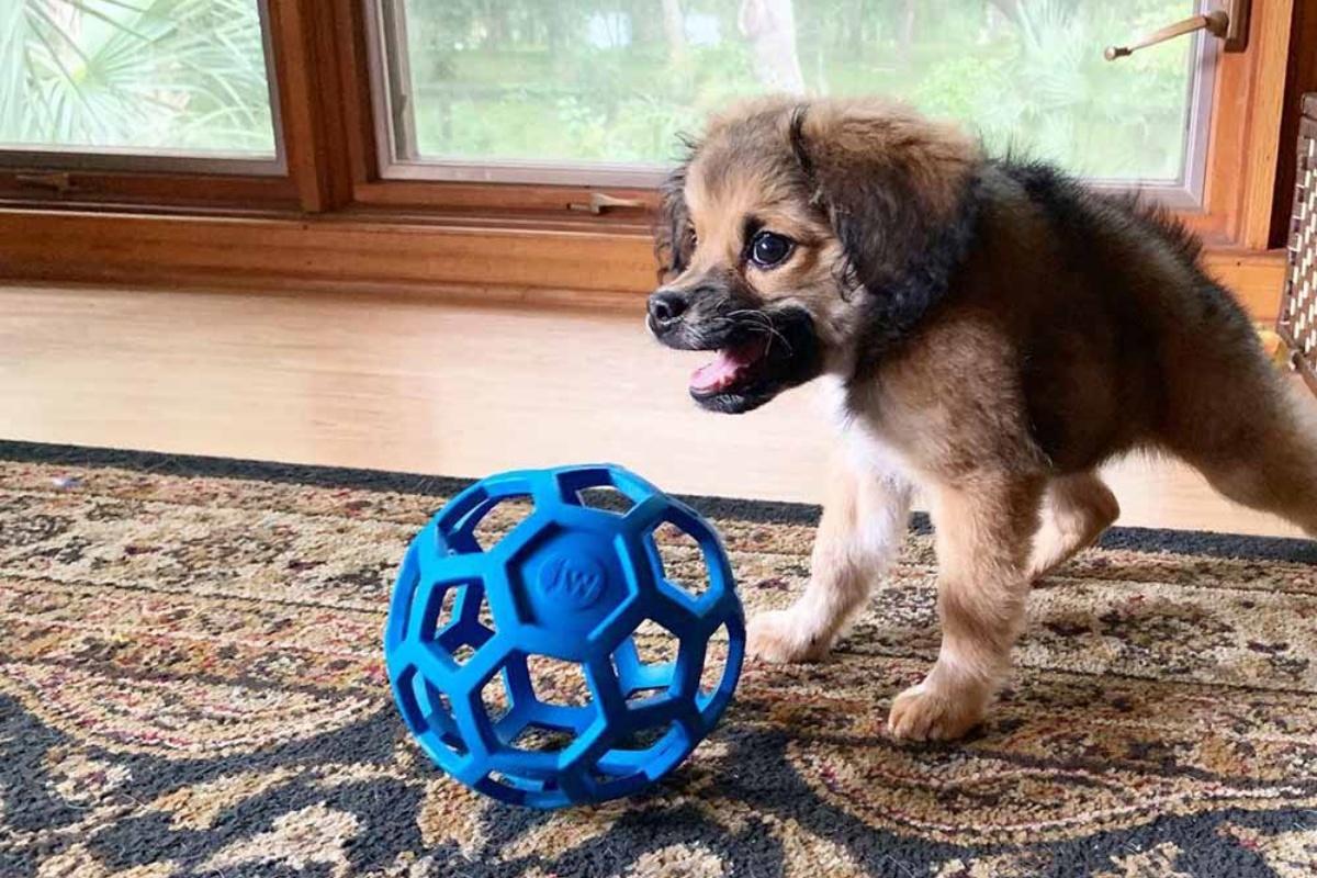 La bellissima storia della cucciola Tilly