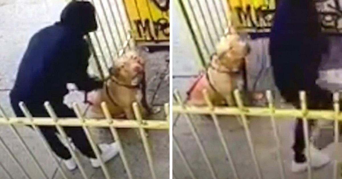 Il terribile abbandono del cane Trap