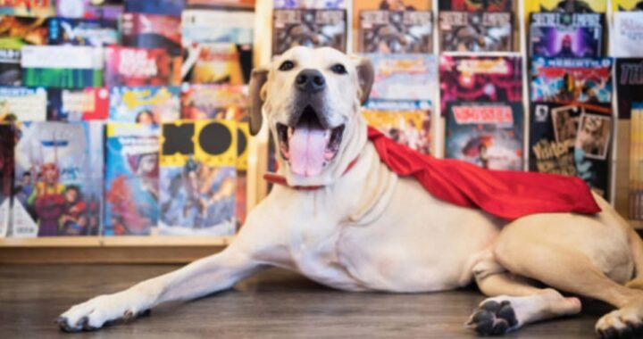 La storia del cane Zeus