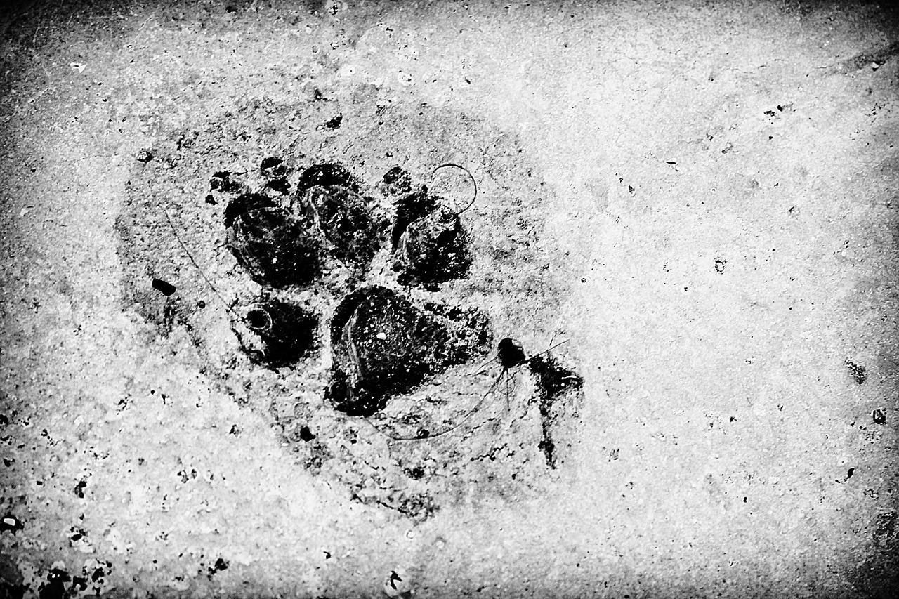 cani abbandonati in una rete