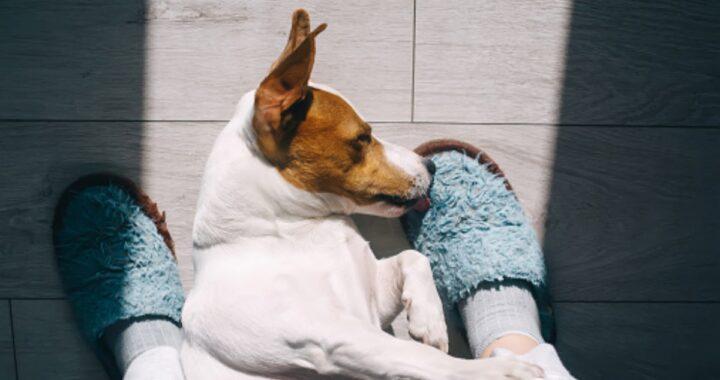 Il tuo cane si addormenta spesso sui tuoi piedi? Non è abitudine, lo fa per un motivo ben preciso. Ecco quale