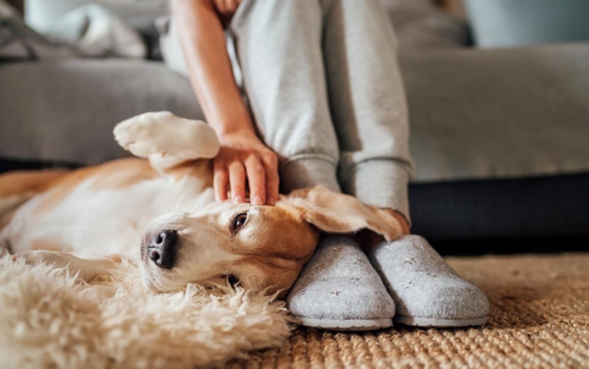 Perché i nostri amici a quattro zampe dormono sui nostri piedi