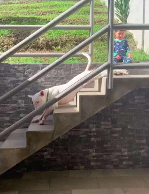Bruno scende le scale