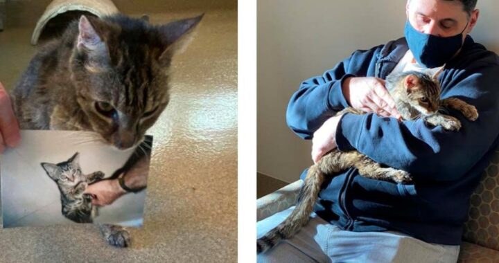 Il gatto Brady scompare nel nulla e 15 anni dopo il suo amico umano, scopre tutto ciò che ha vissuto in quel periodo