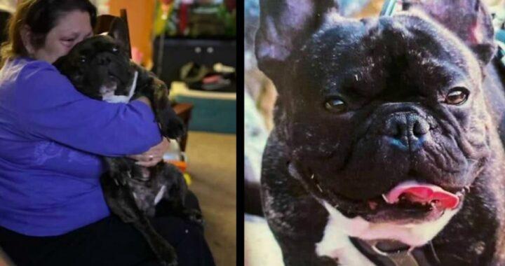 Uomo acquista un cane e poco dopo scopre tutto il suo passato