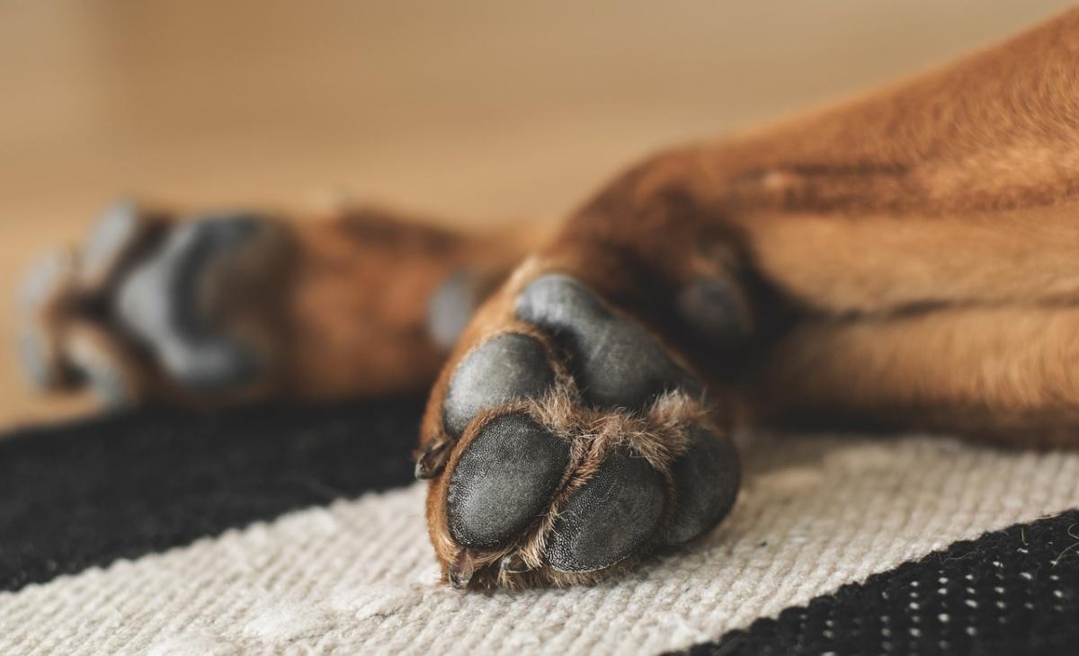 Buk, il cane che ha vegliato il suo papà