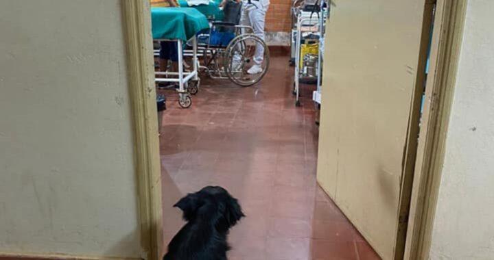 Viene ricoverato in ospedale per Covid: il web commosso da ciò che fa il suo cagnolino per stargli accanto