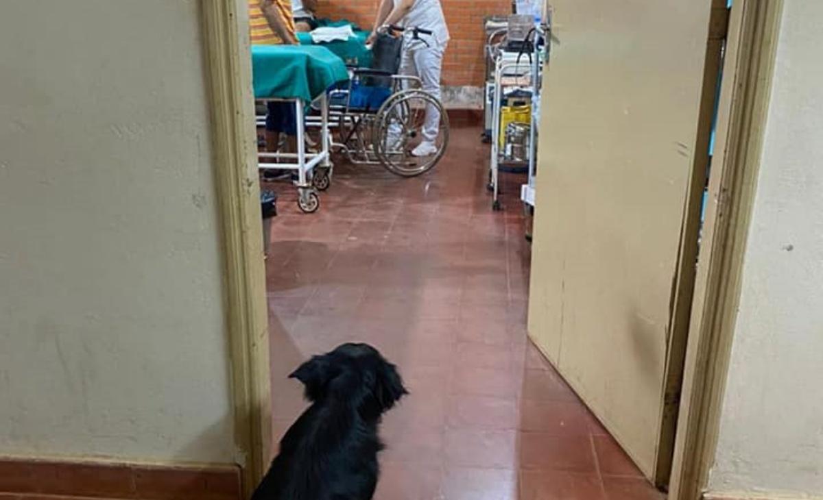 Cagnolino sostiene il suo proprietario malato di Covid