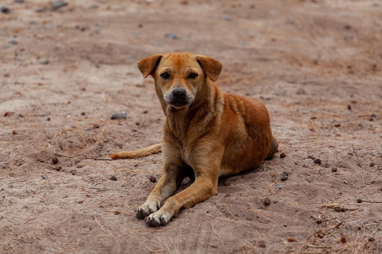 Cane abbandonato in un sacco