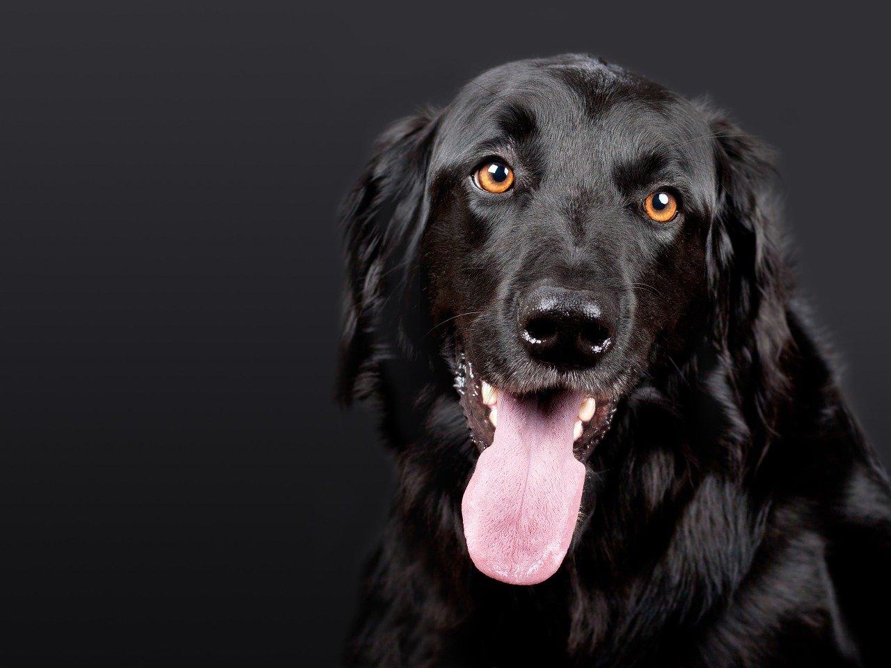 Cane abbraccia il veterinario