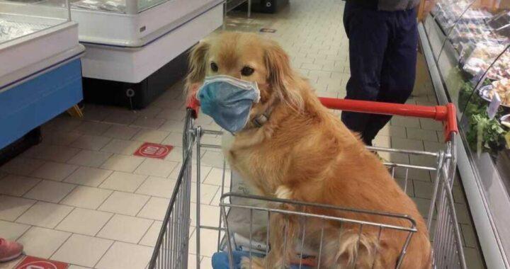 Cane con la mascherina in un supermercato di Belluno: l'indignazione di un cliente