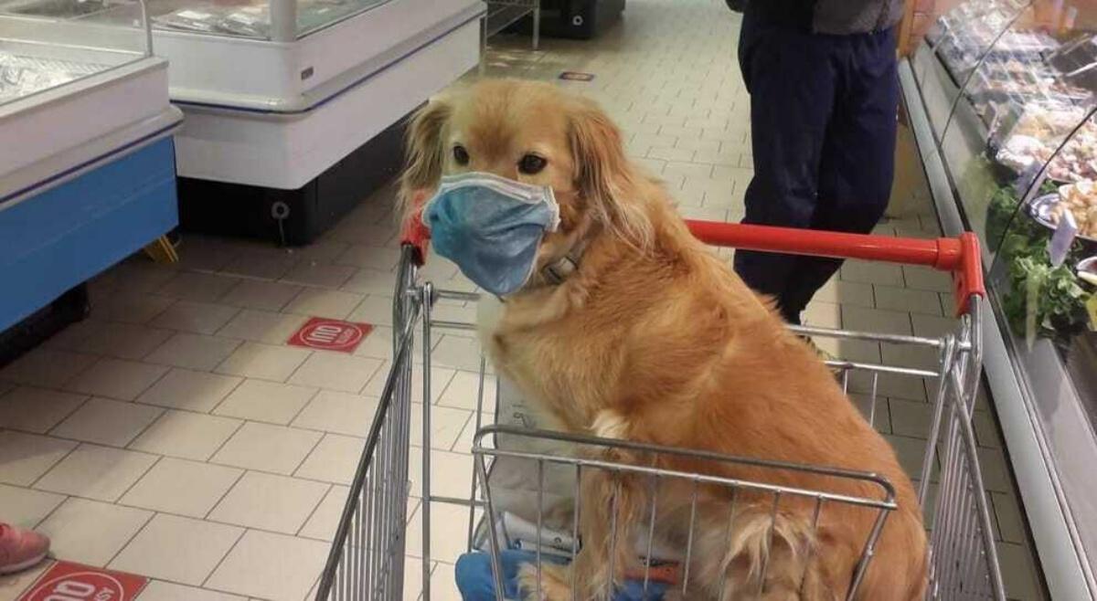 Belluno, cane con la mascherina