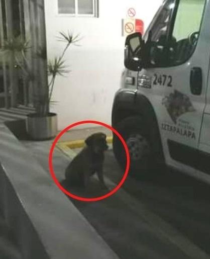 Cucciolo sale in ambulanza