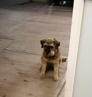 Juan il  cucciolo dolce