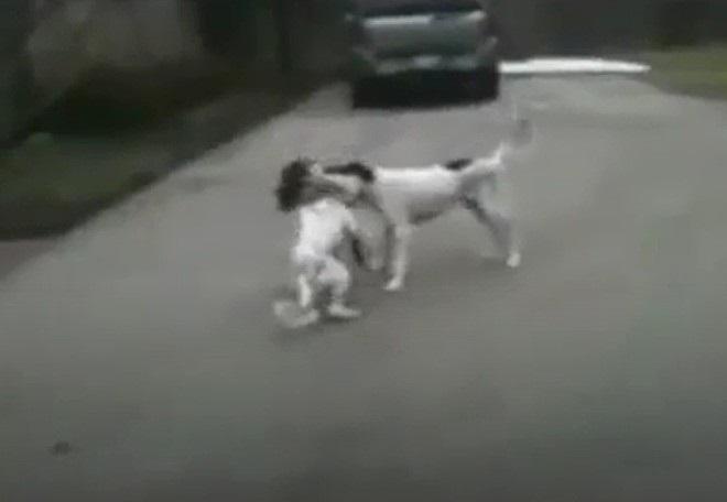 Cuccioli giocano in stra