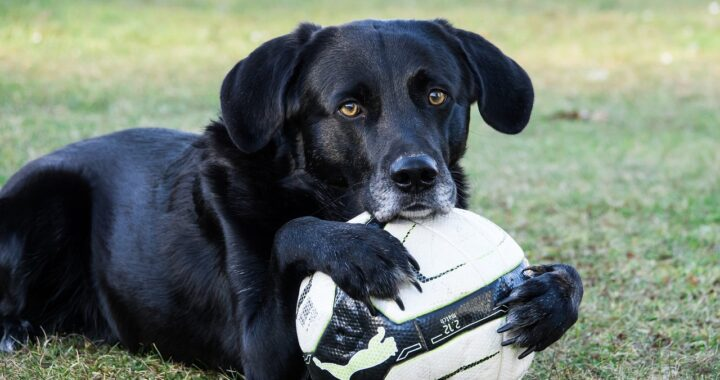Cane gioca da solo a casa