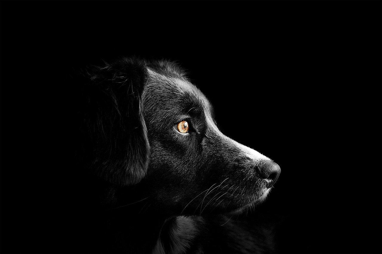 cane incatenato senza acqua e cibo