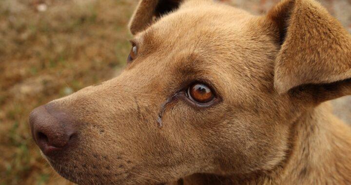 Cane malato implora il proprietario che lo sta abbandonando
