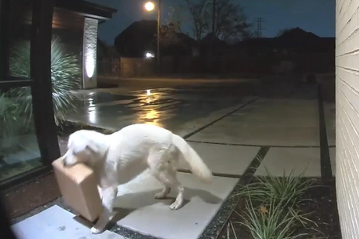 cane pacchi