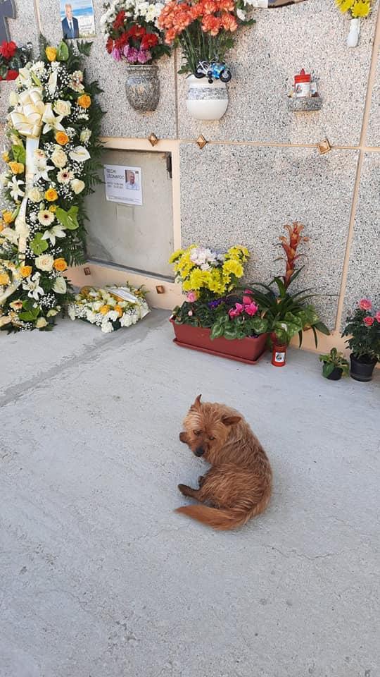 Cane scomparso ritrovato