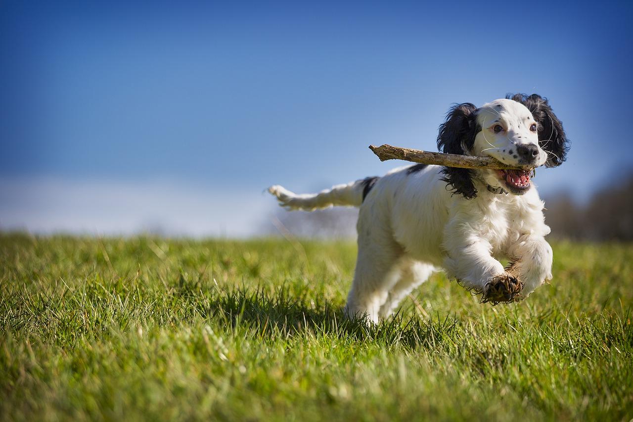 cane sordo sopravvive in una tana di un animale