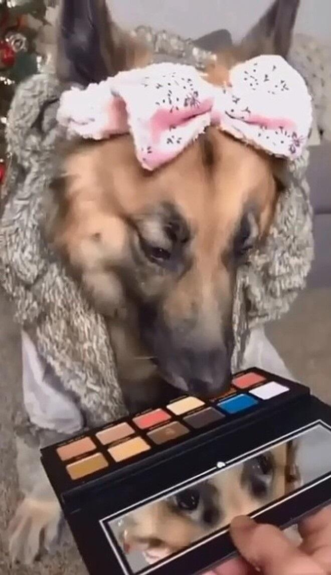 cucciolo sceglie il make up