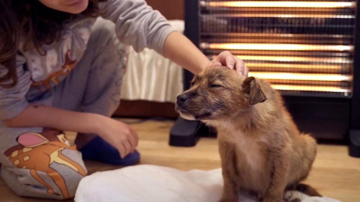 Il salvataggio di un cucciolo abbandonato
