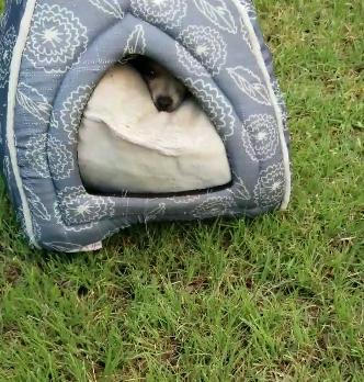 Il cane salvato da Judy