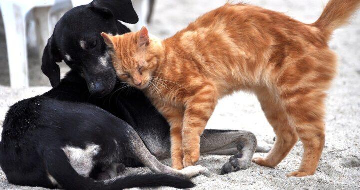 Cucciolo calma due gatti