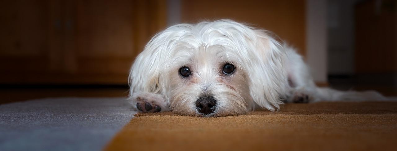Cucciolo salvato dal marciapiede
