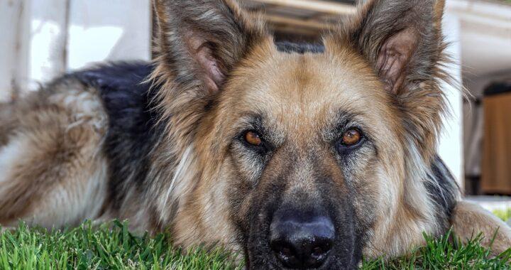 Cucciolo spaventato dai fuochi d'artificio rompe una parete e rimane incastrato