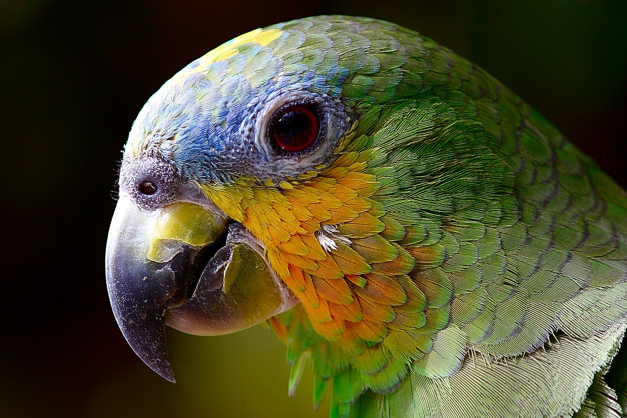 Il pappagallo della Donna di 102 anni