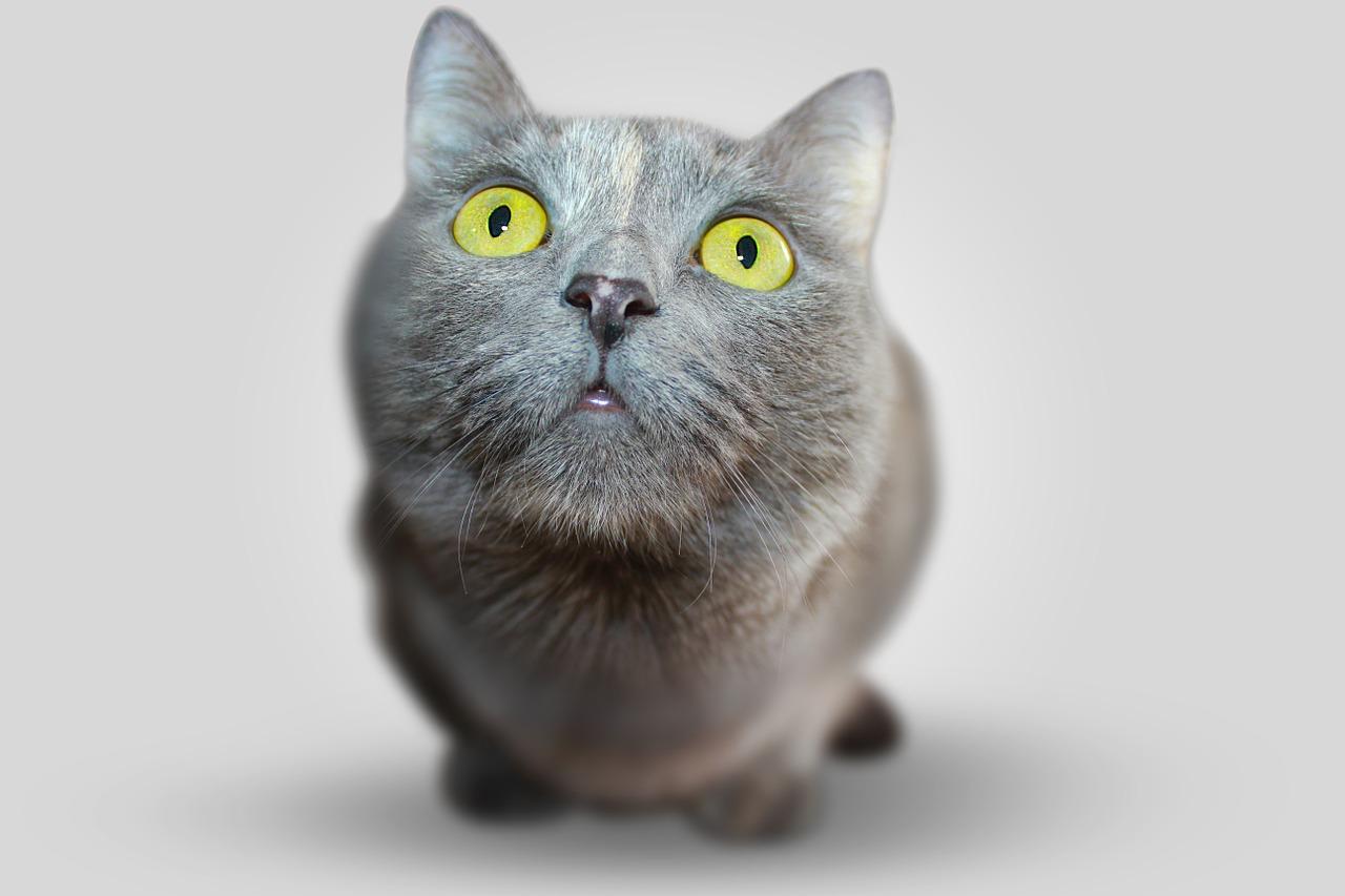 gatta che nessuno voleva adottare