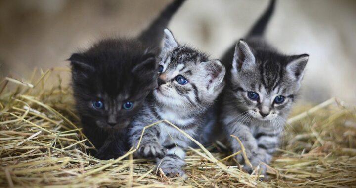 Gattini salvati da una barca