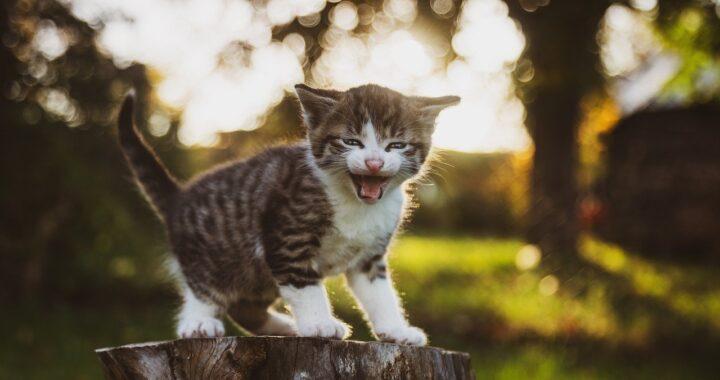 Gattino randagio cieco e malato