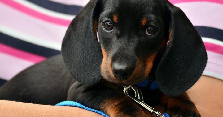 I cani capiscono i nostri stati d'animo