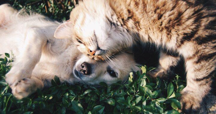 gatto Merlino e cane Anacleto
