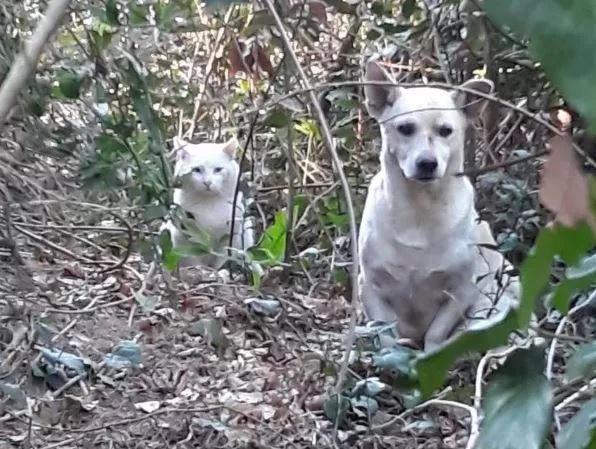 Animali abbandonati in strada