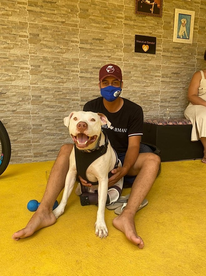 Samson il cane salvato
